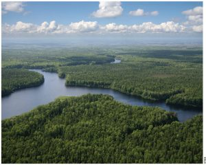 The section of the boreal forest that sits over the tar sands region of Alberta is part of the forest fragmented by oil development.
