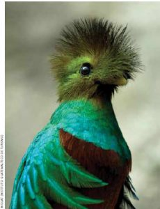 The rare Quetzal is Guatemala's national bird.