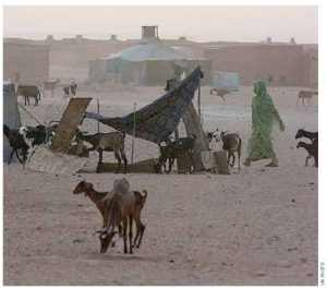 Canadian Lawyers for International Human Rights has sent Canadians lawyers into refugee camps in Western Sahara, where they assisted in the peace process.