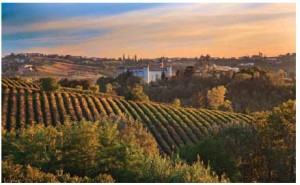 Punset's excellent 2008 Barbaresco is grown in this, the Piedmont region of Italy.