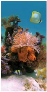 Martinique offers some of the best scuba diving in the Caribbean Sea.
