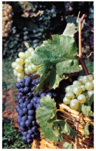 Wine is Georgia's most famous agricultural product; it enjoys an 8,000-year-old tradition. (Photo: Georgian National Tourism Administration)