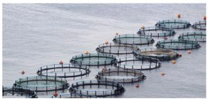 Aquaculture can ensure access to quality food by a growing share of humanity, but its environmental effects earn it harsh criticism. (Photo: © Stefanos Kyriazis | Dreamstime.com)