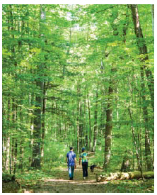 Scarlet tanagers, flying squirrels and red-backed salamanders add to the charm of Gillies Grove, a stately old-growth forest in Arnprior, 30 minutes west of Kanata. (Photo: Gilles Grove)