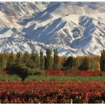 Argentina: More than beef and wine grapes