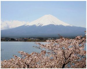 Enjoying cherry blossoms is a springtime rite of passage in Japan; they are shown against the country's iconic Mount Fuji. (Photo: ©Akira Okada©JNTO)