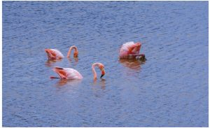 Puerto Villamil, on the Galapagos Islands in Ecuador, boasts beaches that stretch for three kilometres and nearby salt ponds that attract flamingos. (Photo: © Albertoloyo | Dreamstime.com )