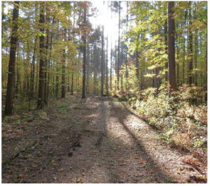 Larose Forest is a magnificent 10,000-hectare treasure about 30 minutes east of Ottawa.