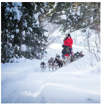 Mont Tremblant isn't just for skiing. You can also go dogsledding nearby. (Photo: @tremblant)