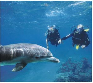 Eilat is a resort town at the very southern tip of Israel. Shown here is Dolphin Reef.  (Photo: TONY MALKEVIST )