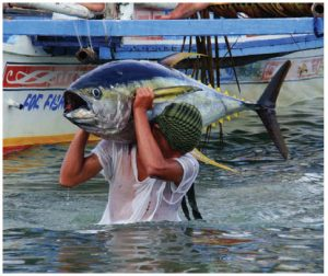 Yellowfin tuna, shown here in the Philippines, is one of the world's many overfished species. (Photo: © Juan Vilata - Dreamstime.com)
