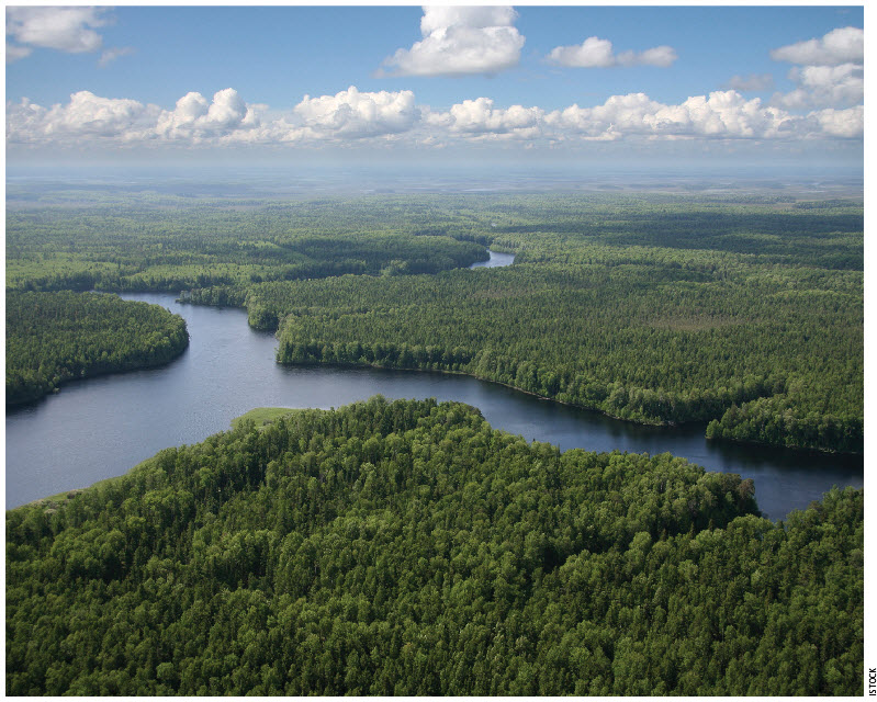 The Canadian boreal forest is one of the world's most important breeding areas for migratory birds, with 1 billion to 3 billion individual birds from at least 300 species known to regularly breed there. Approximately 30 percent of all shorebirds (7 million) and 30 percent of all landbirds (1 billion to 3 billion) that breed in the United States and Canada do so within the boreal. The section of the boreal forest that sits over the tar sands region of Alberta is part of the forest that is rapidly being fragmented by oil development. As much as 34 to 66 percent of the Canadian boreal forest — up to 438 million acres (177 million hectares)— may no longer be intact. In Alberta, 86 percent of the boreal forest is no longer considered intact. This puts valuable bird habitat at risk. The section of the boreal forest underlain by tar sands in Alberta is critical not only as traditional breeding habitat for its 22 million to 170 million birds, but also as a globally important flyway for a great abundance and diversity of wetland-dependent birds. Unfortunately, the rapidly expanding industrial oil extraction operations in Alberta's boreal forest place these birds increasingly at risk on a massive scale. The boreal forest is a critical ecosystem The tar sands deposits lie in the boreal plains ecozone, which covers 183 million acres (74 million hectares) and extends across British Columbia, Northwest Territories, Alberta, Saskatchewan, and Manitoba. Forest cover is predominantly coniferous, and black spruce, white spruce, jack pine, and tamarack are principal species. Hardwoods, particularly trembling aspen, white birch, and balsam poplar, are well represented and are often mixed with conifers. This is one of the most productive forest areas in western Canada.  Approximately 35 percent of the boreal plains is composed of wetlands, including bogs, fens, swamps, marshes, and shallow open-water ponds. Some areas of the boreal plains have 85 to 95 percent wetland ground coverage, and these areas can stretch as wide as 120,000 acres (48,500 hectares). These extensive wetland and water areas combine with complex uplands to create a diverse mosaic of bird habitats. Most of these wetlands are connected through surface and groundwater hydrology and are highly susceptible to damage from tar sands development. Using satellite imagery, scientists documented that less than 20 percent of the 182 million acre (73 million hectare) boreal plains ecozone (the portion of the southern boreal extending from the eastern foothills of the Canadian Rockies to south-central Manitoba) remains in large, intact forest landscapes. Between 1990 and 2000, one million acres (406,000 hectares) of the southern boreal of Saskatchewan and Manitoba and more than 5.9 million acres (2.4 million hectares) of the boreal of Quebec were disturbed by human-caused influences, including forestry, road-building, and other infrastructure development. The region of the boreal that covers northeastern Alberta is a biologically rich area that is known to support at least 292 species of breeding birds, including most of the declining species and 65 bird species of conservation concern. While boreal forest habitat supports densities of breeding birds ranging from 0.64 to 4.86 breeding individuals per acre depending on habitat type, studies of breeding birds in northern Alberta have found some of the highest densities anywhere within the boreal, often exceeding 4.86 birds per acre. The area is also an important migratory corridor for large numbers of ducks, geese, cranes, and shorebirds. Many of these birds use the Peace-Athabasca Delta directly to the north (and downstream) or portions of the river system near agricultural areas along the western and southern edges of the tar sands as staging areas. Surveys in the 1970s estimated up to 1.4 million waterbirds use the delta in fall migration. Limited aerial surveys of shorebirds in the Delta in 1999 found single-day counts of 11,000 and 14,000 birds. In some years, the bulk of the world's population of birds such as Ross's goose has migrated through the boreal forest. In other years, they are joined by large numbers of white-fronted geese, lesser sandhill cranes, and central flyway populations of Canada geese. Aerial surveys of the Peace-Athabasca Delta in late June and July 1998-2001 found as many as 400,000 molting ducks, coot, and geese. In August and September in those same years, numbers peaked at 800,000 individuals.  The boreal forest supports large numbers of songbirds, shorebirds, and waterfowl The boreal supports more than 25 percent of the global populations of 149 bird species and the bulk of some of North America's most abundant bird species. An estimated 38 percent (26 million) of all of the waterfowl of Canada and the United States breed in the boreal. More than 208 million dark-eyed juncos, 116 million white-throated sparrows, 96 million yellow-rumped warblers, 102 million American robins, and 73 million Swainson's thrushes are among the abundant birds that rely on the Canadian boreal for breeding every year. Virtually all species of boreal nesting birds also make use of parts of the boreal during migration. Some birds rely more on the boreal for migratory stop-over habitat than for breeding or wintering. For example, the white-rumped sandpiper does not breed in the boreal but makes extensive use of boreal wetlands during fall and spring migration. Other shorebirds such as the pectoral sandpiper that have insignificant portions of their breeding range in the boreal, are also highly reliant on boreal wetlands during migration. Many waterfowl species also regularly migrate through a large part of the boreal. Within the tar sands, surveys at or over tailings ponds and small natural lakes have regularly documented tens of thousands of waterbird migrants. For example, a spring 2003 survey documented more than 16,000 birds, largely geese, ducks, and shorebirds; however, radar suggested that at least four times that many (64,000) may have actually passed over, as many birds may go visually undetected, especially at night. At Gordon Lake, south of Fort McMurray, one-day counts as high as 5,600 have been documented during the spring, and estimates during fall migration of up to 100,000 ducks have been reported. Kearl Lake has had single-day spring counts as high as 2,700 birds, and of more than 1,000 birds at McClelland Lake. A study in 1972-73 in Syncrude's tar sands lease area found over 1,000 waterbirds present each day during spring and fall migration. The same study documented 1,500 ducks using a section of the Athabasca River on a single day during spring migration. A 1984 study, also on the Syncrude lease, reported more than 18,000 geese observed passing over during fall migration. Similarly, at Utikuma Lake on the southwest edge of the tar sands, aerial surveys documented over 100,000 waterbirds of 29 species using the lake including up to 20,000 gulls, 8,000 canvasbacks, 5,000 lesser scaup, 4,900 bufflehead, 4,500 western grebes, and 4,000 mallards. The Peace-Athabasca Delta has also been estimated to support as many as 130,000 breeding waterfowl — birds that must pass over or near the tar sands during migration. Among these breeding birds have been as many as 20,000 mallards, over 15,000 lesser scaup, nearly 10,000 canvasbacks, 7,000 common goldeneye, and 5,000 bufflehead.  Approximately 94 percent of individual birds migrate out of the boreal after breeding, heading to other countries in the Western hemisphere, or even outside the hemisphere. More species winter in the United States (the lower 48 states) than in any other country or region — a total of 204 species, or approximately 63 percent of boreal breeding birds.  Tar sands development puts some of the world's most at-risk birds in danger Recent global assessments have shown that an ever-increasing number of bird species are at risk. The International Union for Conservation of Nature (IUCN) red list of threatened species now includes more than 10 percent of the world's birds in some conservation concern category, and BirdLife International has documented a doubling of the extinction rate of birds in the last century. In North America alone, more than 400 bird species are listed as being of conservation concern on one or more conservation lists, and there are more than 70 North American species on the IUCN Red List. Some of North America's most rapidly declining birds are among those most reliant on the boreal. Waterfowl like greater and lesser scaup have declined by about 150,000 birds a year since the late 1970s, and the three scoter species have dropped by more than 50 percent since the 1950s. Another wetland bird species, the horned grebe, has declined by 60 percent since the late 1960s. Two of the species showing the most severe documented declines are species that are highly reliant on the boreal forest — the lesser yellowlegs and the rusty blackbird. Both have seen drops of more than 90 percent over the last 40 years. Other species have had less severe but still steep declines, including the olive-sided flycatcher (70 percent decline), Canada warbler (80 percent decline), bay-breasted warbler (70 percent decline), evening grosbeak (70 percent decline), white-throated sparrow (30 percent decline), and the short-billed dowitcher (50 percent decline in some populations). Many of the shorebird species that have been documented migrating through the boreal forest where tar sands are being developed are birds of conservation concern that have shown significant declines and/or have relatively small populations that place them at higher risk. Shorebird species that have been documented in the region include black-bellied plover and American golden-plover, lesser yellowlegs, sanderling, semipalmated sandpiper, white-rumped sandpiper, pectoral sandpiper, stilt sandpiper, and red-necked phalarope. The only wild, migratory population of the highly endangered whooping crane nests solely in and near northeastern Wood Buffalo National Park to the north of today's open-pit mines. Birds from this population migrate over the boreal tar sands region and occasionally stop over at wetland locations.  Jeff Wells, PhD, is with the Boreal Songbird Initiative. He was the lead author and co-authored this report with Susan Casey-Lefkowitz, Natural Resources Defense Council, Gabriela Chavarria, PhD, Natural Resources Defense Council and Simon Dyer, Pembina Institute. Visit www.nrdc.org/wildlife/borealbirds.pdf for the complete, cited report.