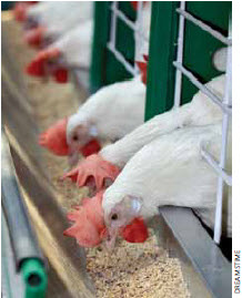 Supply management permits poultry farmers to collectively control the quantity of poultry and eggs produced as well as to set industry-wide pricing.