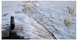 Polar bears approach the bow of a U.S. submarine while it surfaced 450 kilometres from the North Pole.