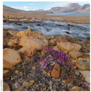 Quttinirpaaq National Park on Canada's Ellesmere Island
