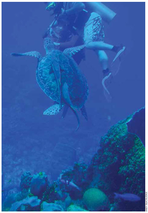 The 300-kilometre Belize Barrier Reef Reserve System, covering 96,000 hectares, is the largest reef complex in the northern hemisphere.