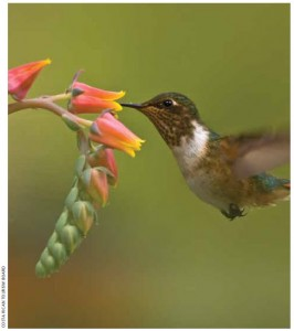 Costa Rica is a bird-watcher's paradise with almost 850 species, including hummingbirds.