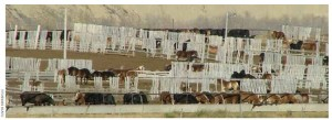 Horse feedlot in Alberta where thousands of horses are held before slaughter for their meat. Canadian abattoirs killed 82,000 horses in 2012.