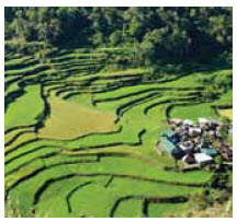In 2013, the Philippines became self- sufficient in rice production and started  exporting three varieties.