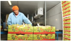 Agricultural products, such as melons and bananas, are among the goods Honduras sends to Canada.