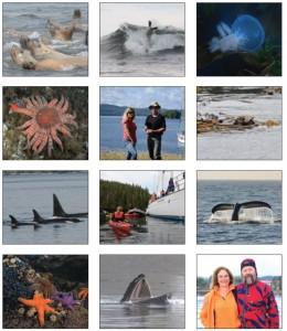 Left to right, top to bottom: The enthusiastic sea lion welcoming committee swims up to visitors in Ocean Light II's Zodiac; a surfing sea lion gets flipped out of the wave; hooded nudibranch; sunflower sea star; Jenn Broom, owner, and Chris Tulloch, skipper of Ocean Light II; sea otter wrapped in kelp (a good way to sleep); orcas fishing in formation; sea kayaking before breakfast; a humpback whale fluke during a hunting dive; sea stars; hunting humpback scooping up small fish before using the bristle-like baleen that line its mouth as a sieve; Donna Jacobs, Diplomat publisher and Mike Beedell, wildlife guide and contributing Diplomat photographer.