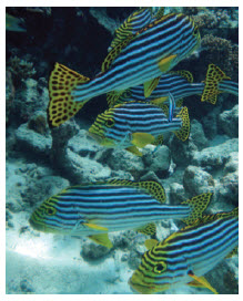 Maldives offers excellent snorkelling and scuba diving. (Photo: Uxbona)