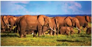In Kenya's national parks, elephants can be seen everywhere. (Photo:  Joey Makalintal)