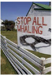 Several whale species remain endangered, despite a 1986 commercial moratorium. (Photo: © Mikelane45 | Dreamstime.com)