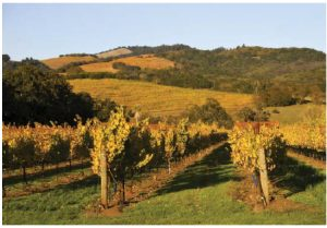 """Clos du Bois' 2013 """"Calcaire"""" Chardonnay, from Sonoma's Russian River Valley, pictured here, is a rich wine, characterized with citrus and mineral flavours. (Photo: © Aaron Knight 