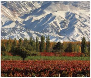 Argentina has a vibrant wine industry, whose Malbec grape, grown here, is already well known to Canadians. (Photo: Argentine Tourism Agency)