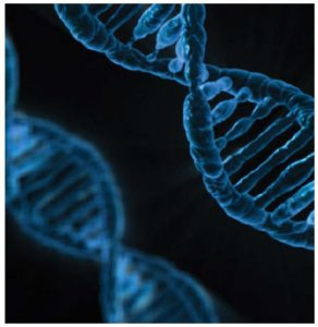 Gene manipulators can cut, edit and paste genes much as a word processor can manipulate text. (Photo: Pixaba)