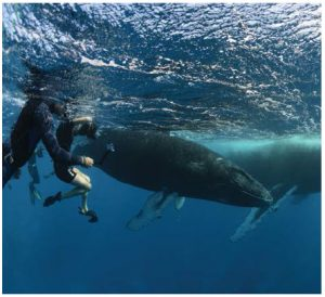 Members of the group photograph the male calf as his calm mother, named Canopy by whale researchers, surfaces for a breath. (Photo: Mike Beedell)