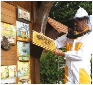 A beekeeper examines the honeycombs of a traditional Slovenian painted beehive. (Photo: Aleš Fevžer, 2015)