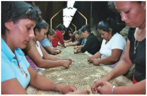 El Salvador is ranked by the World Bank as the second-best country in Central America in which to do business. Coffee is one of its main exports to Canada — a green bean processing plant is shown here.  (Photo: The cockroach)
