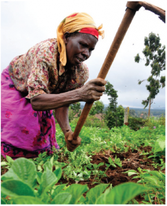 Africa can no longer feed itself. The continent has 65 per cent of the globe's arable land that is available for cultivation, but much of it currently lies fallow. (Photo: Neil Palmer (CIAT))