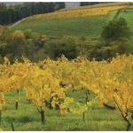 Biodynamic wine production up by 20 per cent annually