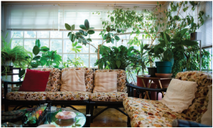 The casually decorated sunroom is now a smoking room to which the ambassador's husband retires with company to try a variety of Cuba's best Havanas. (Photo: Ashley Fraser)