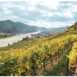 Austrian wines are made using best practices that date back to the time of the Romans. Wine-makers follow traditions to create wines that taste of the country's distinctive terroir. (Photo: domane WACHAU)