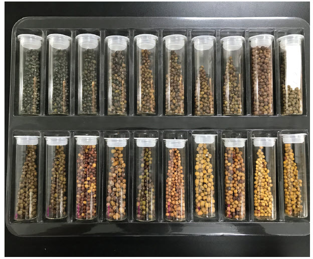 These seeds belong to AVRDC, the World Vegetable Centre, which is an independent organization headquartered in Shanhua, Taiwan, with sites in Asia, Africa, Uzbekistan, Korea and Cameroon. (Photo: crop trust)