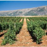 Lebanon: Where trade opportunities abound
