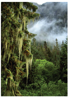 Great Bear Rainforest (photograph) by Michelle Valberg at Wall Space Gallery. (Photo: Michelle Valberg)