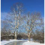 Shiny ice on the skating trails at RiverOak. (Photo: courtesy of RiverOak)