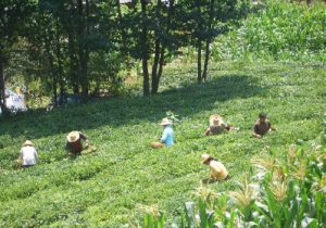 By one account, 33 per cent of China's population — or more than the entire population of the U.S. — works in agriculture. Shown here are tea harvesters in Muyu Town in Hubei province. (Photo: Vmenkov)