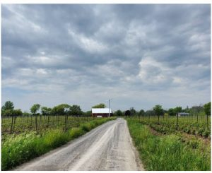 Stanners Vineyard is an artisanal, family-owned and operated winery located near the village of Hillier in Prince Edward County. Try its Pinot Gris Cuivré for a good skin-contact wine. (Photo: Remi Theriault)